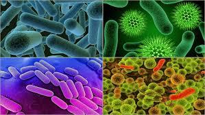 Biyoloji deneyi: Bakteriler nasıl ürer?